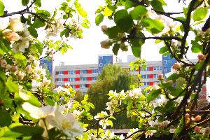 Gemeinschaftsgarten Johannstadt