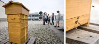 Umundu - Dresdner Honig, die süße Ernte einer bunten Stadt @ Centrum Galerie | Dresden | Sachsen | Deutschland