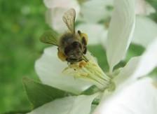 Wesensgemäße Bienenhaltung: Varroa - Kontrolle & Behandlung @ Selbstversorgungsgarten Tharandt | Tharandt | Sachsen | Deutschland