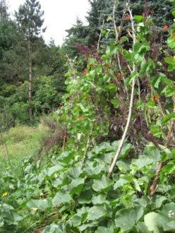Naturnahes Gärtnern mit der Permakultur @ Selbstversorgungsgarten Tharandt