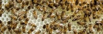 Workshop Wesensgemäße Bienenhaltung @ Johannstadthalle | Dresden | Sachsen | Deutschland