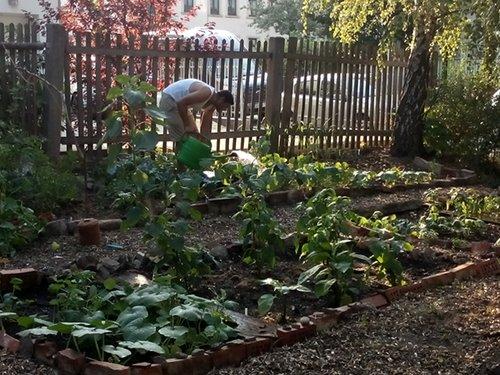 Einige geflüchtete Menschen hatten in ihrer Heimat auch einen Garten
