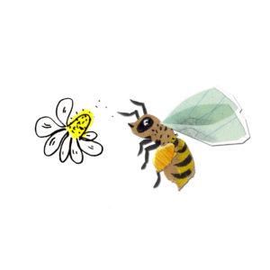 wild & wertvoll - Wildbienen & Nützlinge @ Apfelgarten | Dresden | Sachsen | Deutschland