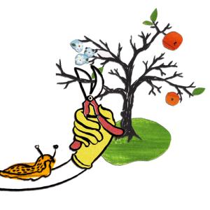 rauf & runter – naturgemäßer Obstbaumschnitt @ Gemeinschaftsgarten Gorbitz