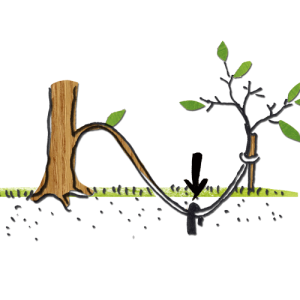 teile & herrsche – Gehölze & Sträucher vermehren @ Apfelgarten |  |  |