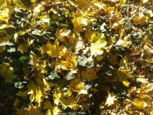 Herbst-Gartennetzwerktreffen @ Grüne Ecke