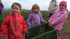 Kartoffelfest für Groß und Klein @ Schellehof