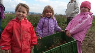 Kartoffelfest für Groß und Klein @ Schellehof | Struppen | Sachsen | Deutschland