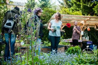 Würzig und gesund! Kräuter- und Blütenvielfalt entdecken @ Internationale Gärten Dresden