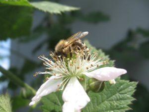 Wochenendseminar auf der Johannishöhe: Wesensgemäße Bienenhaltung @ Johannishöhe | Tharandt | Sachsen | Deutschland