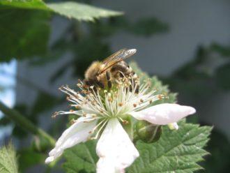 Wochenendseminar auf der Johannishöhe: Wesensgemäße Bienenhaltung @ Johannishöhe