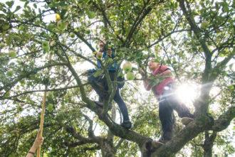 Neue Solidarische Streuobstwirtschaft feiert die Apfelblüte @ Streuobstwiesen in Niedergohlis