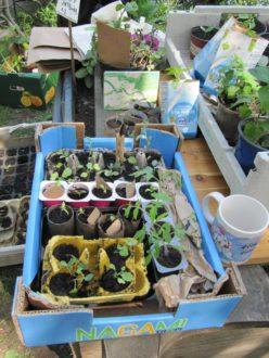 Pflanzentauschbörse @ Aprikosengarten