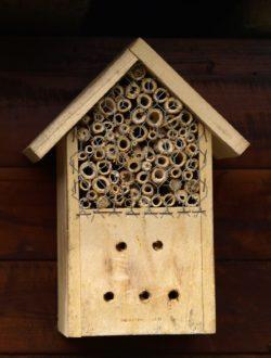 """UFER-Workshop """"Nisthilfen und Nahrung für Wildbienen & Vögel"""" @ Wurzelwerk Pieschen"""