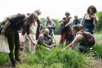 Workshop Wildkräuter @ Wurzelwerk Pieschen