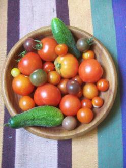 Rund und bunt! Tomatenvielfalt entdecken @ Wurzelwerk Pieschen