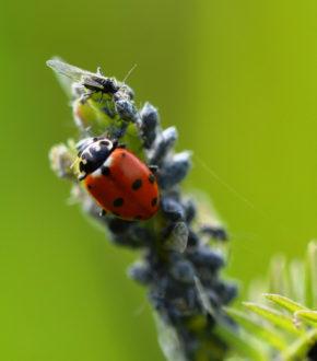 """""""Insekten willkommen"""" - Nützlingsförderung im Garten *UFER-Workshop* @ Wurzelwerk Pieschen"""