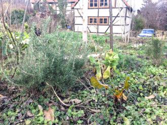 Workshop: Mehrjährige Gemüse unter Obstbäumen @ Gemeinschaftsgarten Wurzelwerk