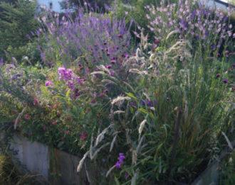 Kleine Wildnis in der Stadt – dauerhafte und schöne Wildblumenbeete anlegen